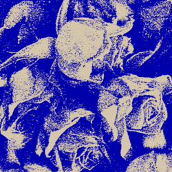 Roses_in_blue_preview
