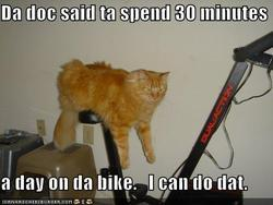 Funny-pictures-cat-excercise-bike_preview