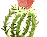 Cactus2_thumb