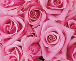 1248168208many-pink-flowers_1__thumb