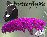Butterflyme_preview