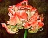Tulip_1_thumb