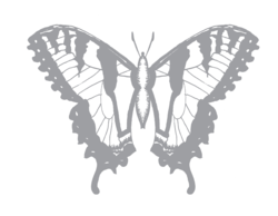 Butterfly_black_and_white_2_preview