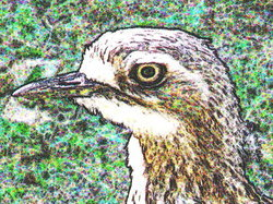 Curlew_cropped__p5150563_2012_05_25__small_preview