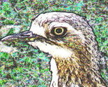 Curlew_cropped__p5150563_2012_05_25__small_thumb