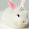 Princess_bunny_preview