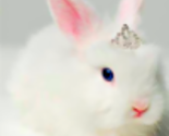 Princess_bunny_thumb