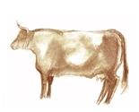 Brown_cow_thumb