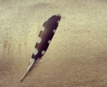 Feather_thumb