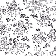 Cone_flower_preview