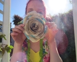 Cabbage_rose_close_thumb