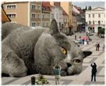 Bigcat_thumb