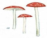 Three-mushrooms-watercolor_thumb