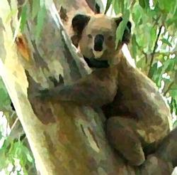 Koalalady_preview